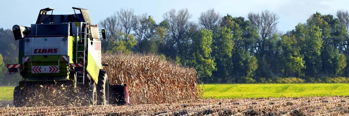 Україна має найбільший в Європі урожай кукурудзи